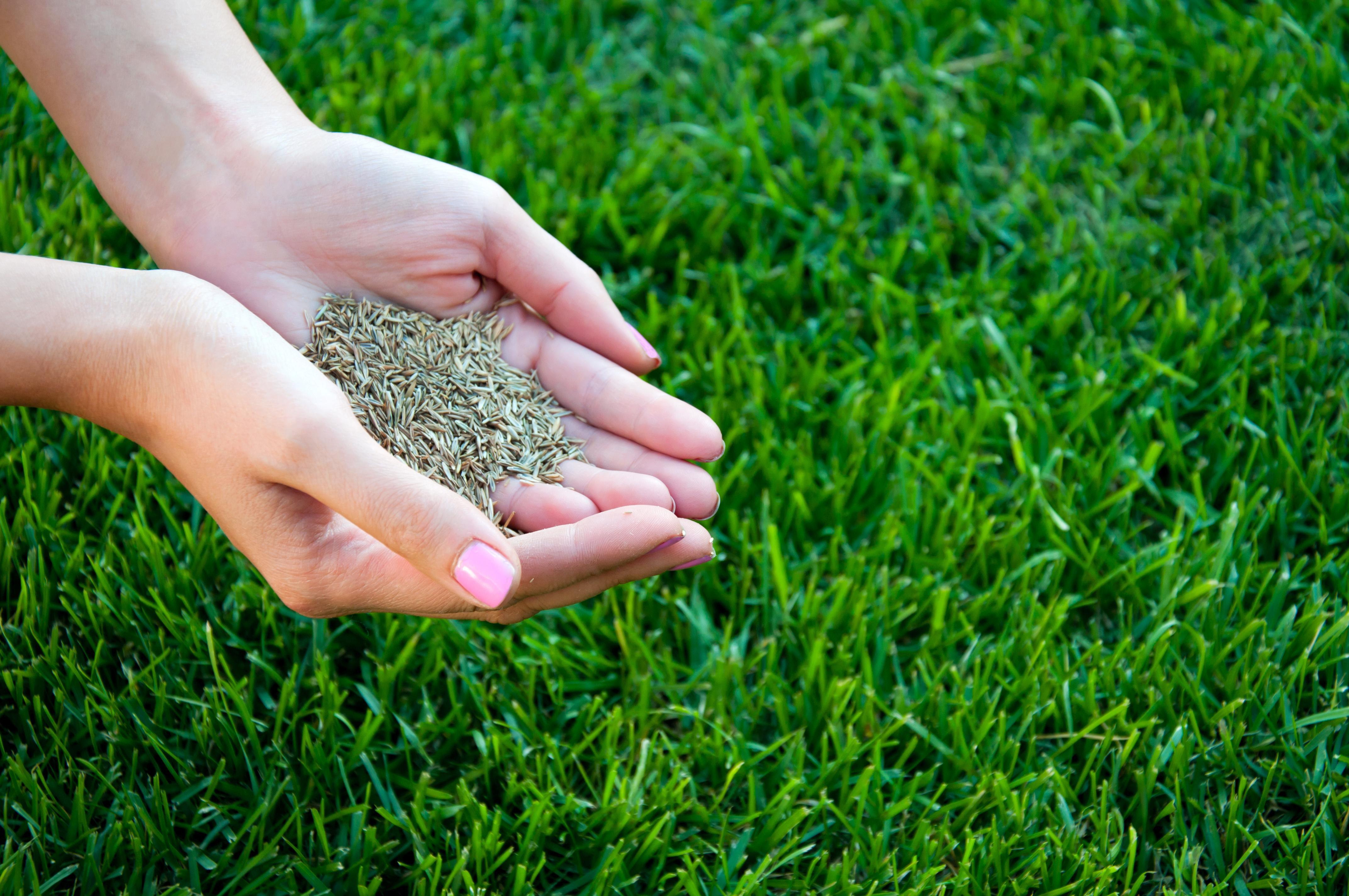 Как правильно посеять и посадить газон на даче своими руками 38